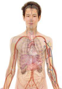 人間の身体