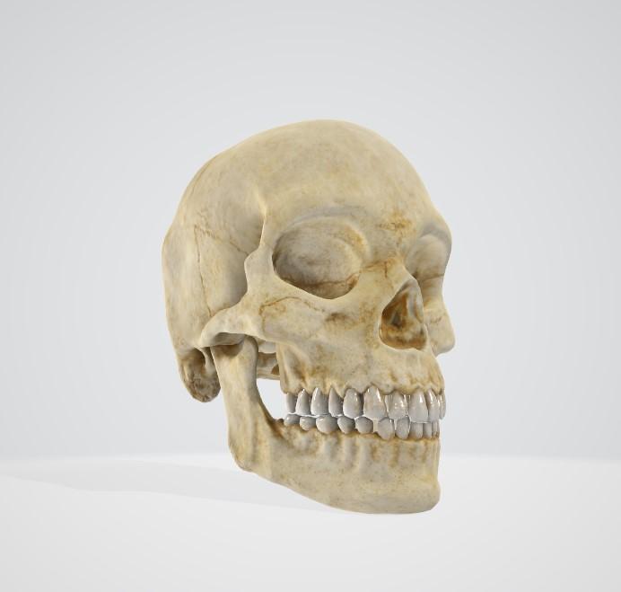 頭・顎の症状